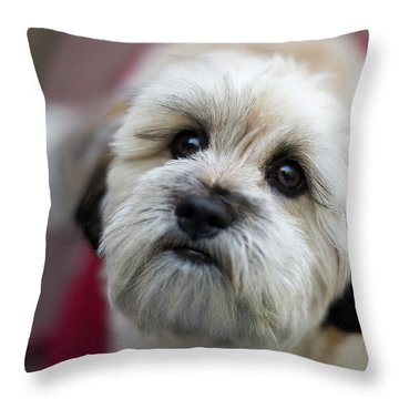Lucy 2 Throw Pillow