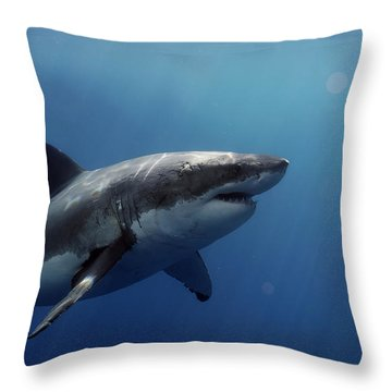 Lucy Posing At Isla Guadalupe Throw Pillow by Shane Linke