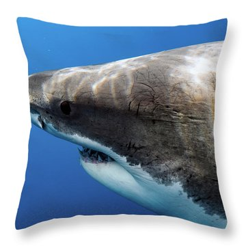 Lucy's Profile Throw Pillow by Shane Linke