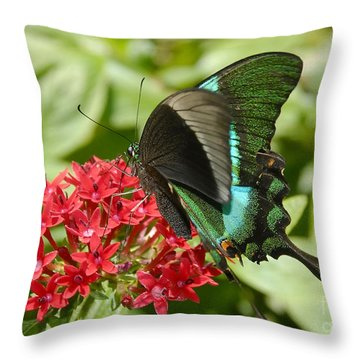 Luminescence Throw Pillow by David Lee Thompson