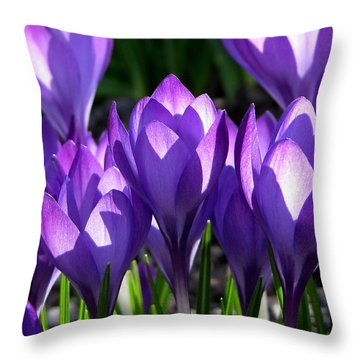 Throw Pillow featuring the photograph Luminous Floral Geometry by Byron Varvarigos