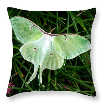 Luna Mission Accomplished Throw Pillow by Carla Parris