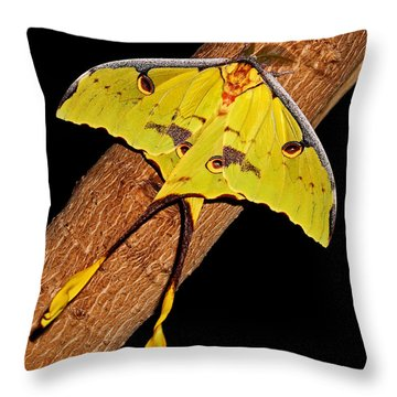 Throw Pillow featuring the photograph Luna Moth by Judy Vincent