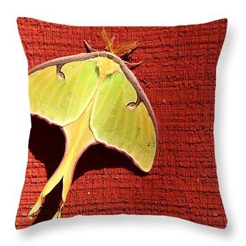 Luna Moth On Red Barn Throw Pillow