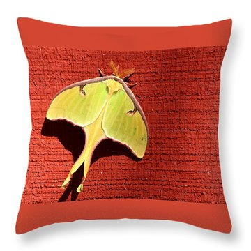 Luna Moth On Red Barn Throw Pillow by Sheila Brown