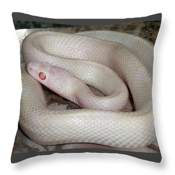 Luna White Snake Throw Pillow by Patricia McNaught Foster