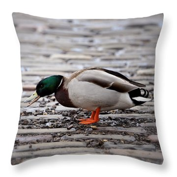 Throw Pillow featuring the photograph Lunch Time by Jeremy Lavender Photography