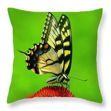 Throw Pillow featuring the photograph Lunchtime by Byron Varvarigos