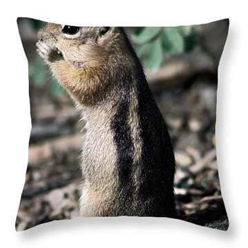Lunchtime For Ground Squirrel Throw Pillow by Sally Weigand