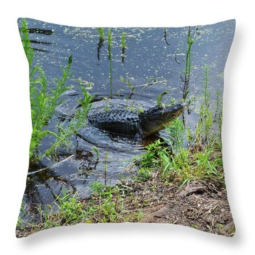 Lunging Bull Gator Throw Pillow by Warren Thompson