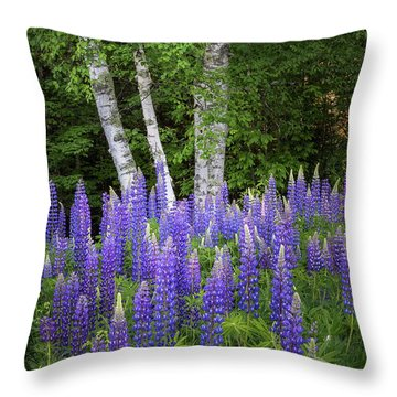 Lupine And Birch Tree Throw Pillow