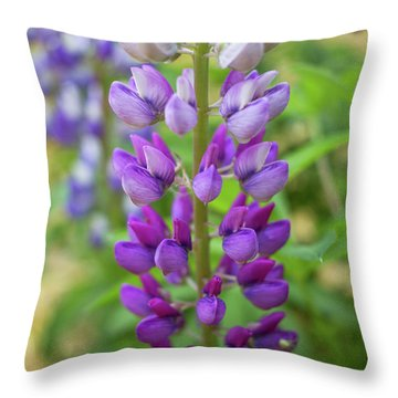 Lupine Blossom Throw Pillow by Robert Clifford