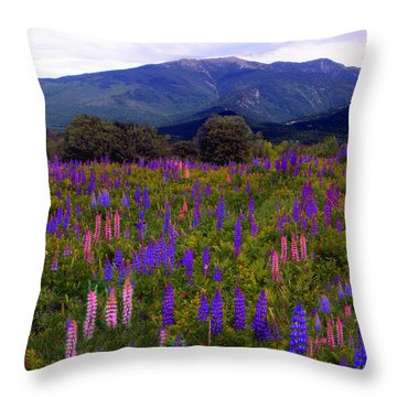 Lupine Field In Franconia Range Throw Pillow