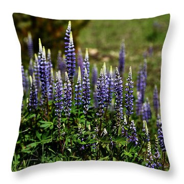 Lupine In Montana 2 Throw Pillow