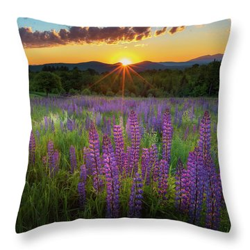 Lupine Lumination Square Throw Pillow