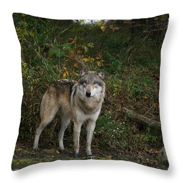 Throw Pillow featuring the photograph Lupine Pose by Shari Jardina