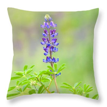 Throw Pillow featuring the photograph Lupine by Ram Vasudev