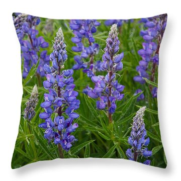 Lupine Wildflowers Throw Pillow by Aaron Spong