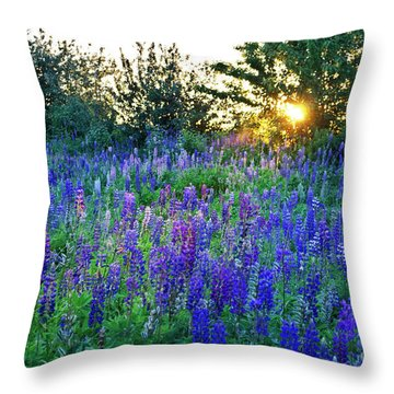 Lupins In The Sunbeam Throw Pillow