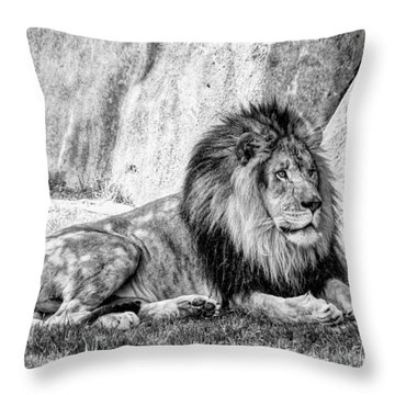Animal Portraiture Throw Pillows