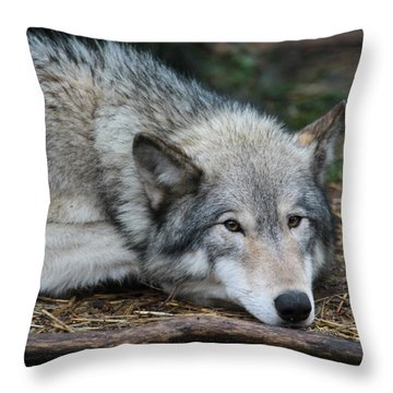Throw Pillow featuring the photograph Lying In Wait by Laddie Halupa