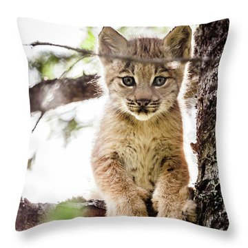 Lynx Kitten In Tree Throw Pillow