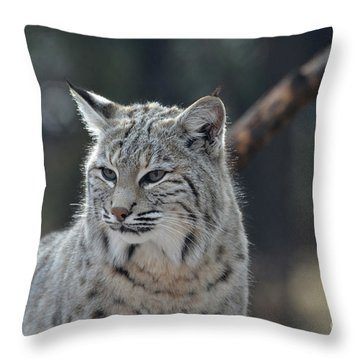 Lynx With A Very Unhappy Face Throw Pillow by DejaVu Designs