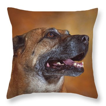 Mabel  Throw Pillow by Brian Cross