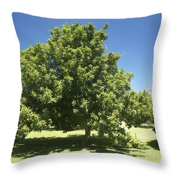 Macadamia Nut Tree Throw Pillow by Kicka Witte - Printscapes