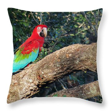 Macaw Resting Throw Pillow