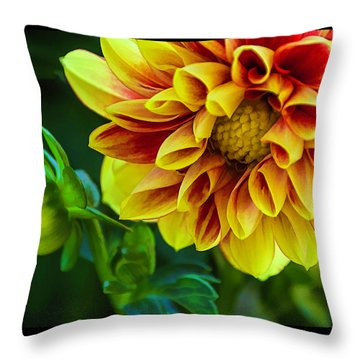 Throw Pillow featuring the photograph Macro Dahlia by Julie Palencia