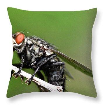 Macro Fly Throw Pillow