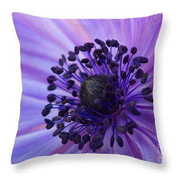 Macro Of Lavender Purple Anemone Throw Pillow
