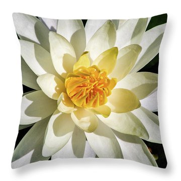 Macro Water Lily Throw Pillow