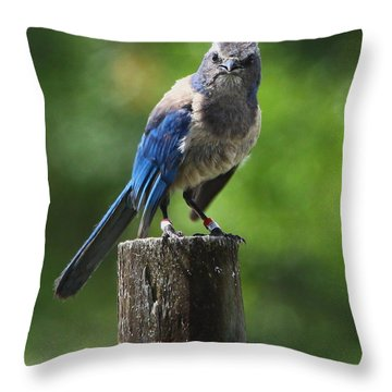 Mad Bird Throw Pillow