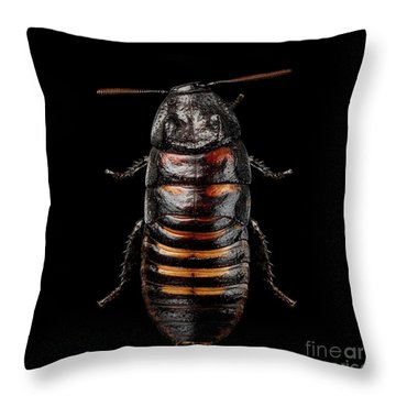 Throw Pillow featuring the photograph Madagascar Hissing Cockroach by Sergey Taran