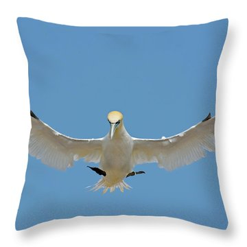 Maestro Throw Pillow by Tony Beck