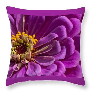 Magenta Zinnia Throw Pillow