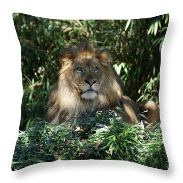 Magestic Lion Throw Pillow by Heidi Poulin