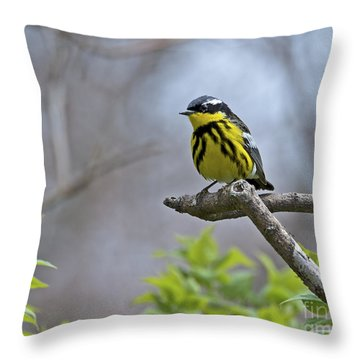 Maggie... Throw Pillow
