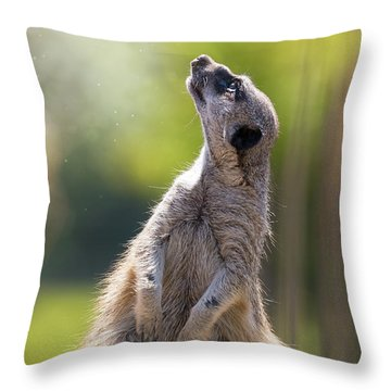 Magical Meerkat Throw Pillow