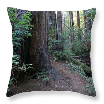 Magical Path Through The Redwoods On Mount Tamalpais Throw Pillow