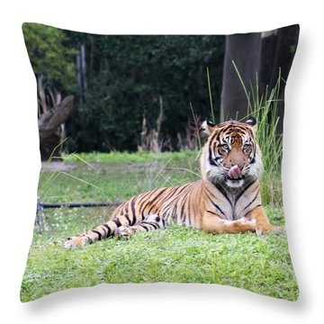 Throw Pillow featuring the photograph Magnificent Creature by Vadim Levin