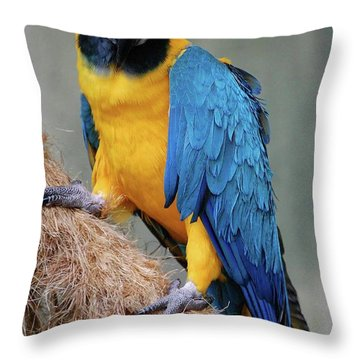 Magnificent Macaw Throw Pillow by DigiArt Diaries by Vicky B Fuller