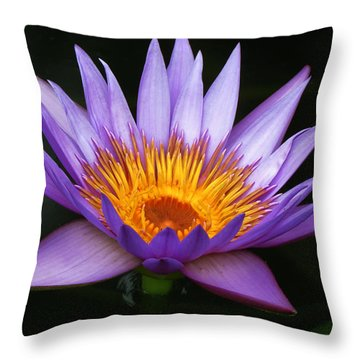 Magnificent Purple Throw Pillow