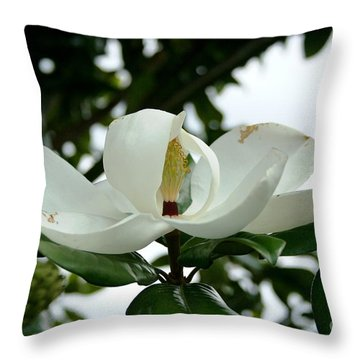 Throw Pillow featuring the photograph Magnolia by John Black