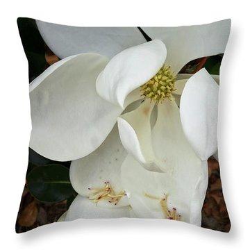 Magnolia Throw Pillow by Matthew Bamberg