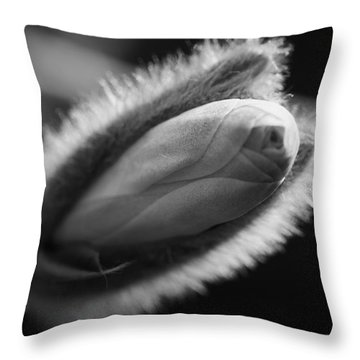 Magnolia Stellata Bud Throw Pillow