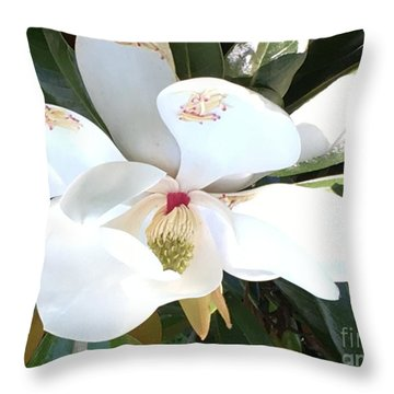 Magnolia Tree Bloom Throw Pillow by Debra Crank
