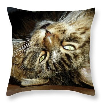 Throw Pillow featuring the photograph Main Coon, Crazy. by Roger Bester